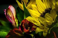 Alto contraste, ramo vivo del girasol del color imagenes de archivo