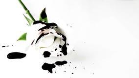Alto contraste Rose blanca manchada sangre almacen de metraje de vídeo