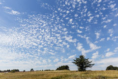 Alto-cumulus Royalty Free Stock Photo