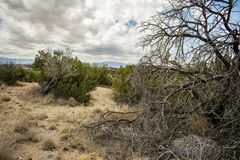 Alto deserto in Rocky Mountians immagine stock
