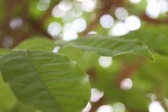 Alto dettaglio delle foglie verdi immagine stock