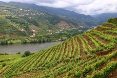 Alto Douro DOC. Portugal wine region - vineyards on hills along Douro river valley. Alto Douro DOC stock photography