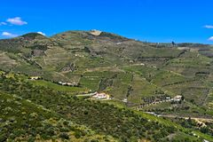 Alto Douro Vineyards. For port wine, Pinhao, Douro Valley, Portugal stock photography
