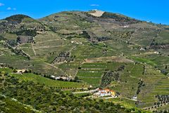 Alto Douro Vineyards. For port wine, Pinhao, Douro Valley, Portugal stock image