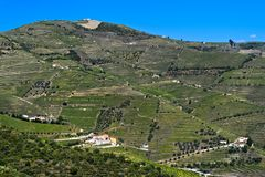 Alto Douro Vineyards. For port wine, Pinhao, Douro Valley, Portugal royalty free stock photography