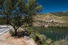 Alto Douro vingård, Portugal royaltyfria bilder
