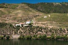 Alto Douro vingård, Portugal arkivbilder