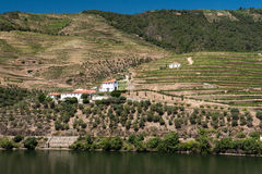 Alto Douro-Weinberg, Portugal Stockbilder