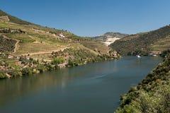Alto Douro-Weinberg und Fluss, Portugal Stockbild