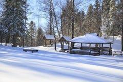 Alto en bosque del invierno Fotografía de archivo
