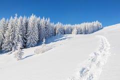 Alto en los árboles verdes de las montañas, cubiertos con nieve Fotos de archivo libres de regalías
