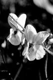 Alto en noir et blanc Photo stock