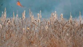 Alto incendio fuera de control grande terrible en la estepa del bosque La hierba seca de la estepa está quemando en otoño profund almacen de video