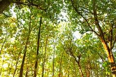 Alto iniziale dell'albero di autunno allineato fotografia stock