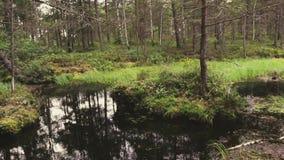 Alto metraggio di definizione della palude nella foresta stock footage