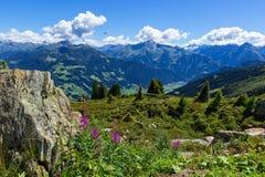 Alto Mountain View con el prado y las piedras verdes en el primero plano Alto camino alpino de Zillertal, Austria, el Tirol, Zill imagenes de archivo