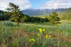 Alto paesaggio alpino del parco nazionale splendido delle montagne rocciose, Colorado fotografia stock libera da diritti