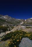 Alto paese del Colorado in estate Fotografia Stock Libera da Diritti
