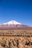 Alto paisaje andino de la tundra en las montañas de los Andes Fotos de archivo