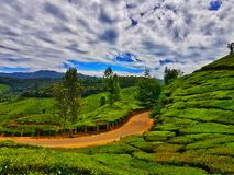 Alto paisaje del rango dinámico de los jardines de té munnar Kerala foto de archivo