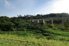 Alto ponte ferroviario d'acciaio che attraversa un giacimento verde del riso Fotografia Stock