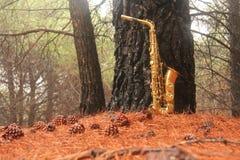 Alto Saxophone de oro en el bosque en el pie del monte Etna La isla de Sicilia, Italia Lugar para el texto tarjeta romántico foto de archivo