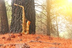 Alto Saxophone de oro en el bosque en el pie del monte Etna La isla de Sicilia, Italia Lugar para el texto tarjeta romántico fotografía de archivo