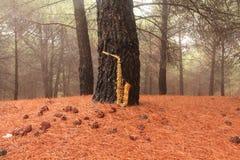 Alto Saxophone de oro en el bosque en el pie del monte Etna La isla de Sicilia, Italia Lugar para el texto tarjeta romántico fotos de archivo libres de regalías