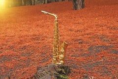 Alto Saxophone de oro en el bosque en el pie del monte Etna T imágenes de archivo libres de regalías