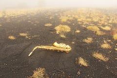 Alto Saxophone Lies de oro en el fondo negro Romántico y fotos de archivo libres de regalías