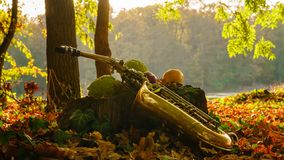 Alto saxophone in the park near the stump, Autumn colors in the woods. Golden alto saxophone and colorful fruits on the stomp in the woods, Autumn colors by the stock photos