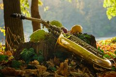 Alto saxophone on the stump in the forest, Alto saxophon with autumn colors royalty free stock photos