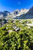 Alto Tatras, Slovacchia Fotografie Stock