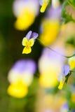 Alto tricolore Photo stock