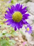 Alto vicino del fiore fotografia stock