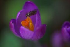 Alto vicino del fiore immagini stock