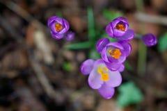 Alto vicino del fiore fotografie stock libere da diritti