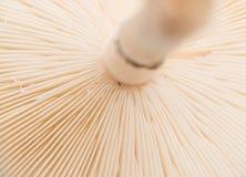 Alto vicino del fungo fotografia stock libera da diritti