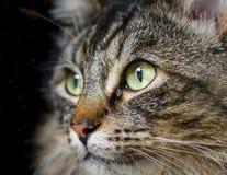 Alto vicino del gatto fotografia stock libera da diritti
