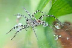 Alto vicino del ragno Fotografia Stock