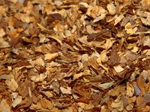 Alto vicino del tabacco immagini stock