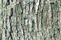 Alto vicino dell'albero Fotografie Stock