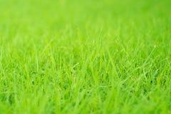 Alto vicino dell'erba Fotografia Stock