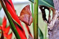 Alto vicino della farfalla Immagini Stock Libere da Diritti
