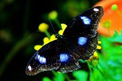 Alto vicino della farfalla Fotografia Stock Libera da Diritti