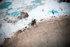 Alto vicino della mosca Immagini Stock Libere da Diritti