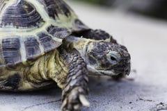 Alto vicino della tartaruga Fotografia Stock Libera da Diritti