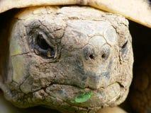Alto vicino della tartaruga Fotografie Stock Libere da Diritti