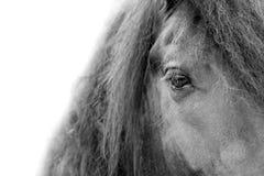 Alto vicino nero della testa e della criniera di cavallo Fotografia Stock Libera da Diritti