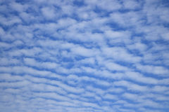 Altocumulus cloud. Or blue sky Royalty Free Stock Images